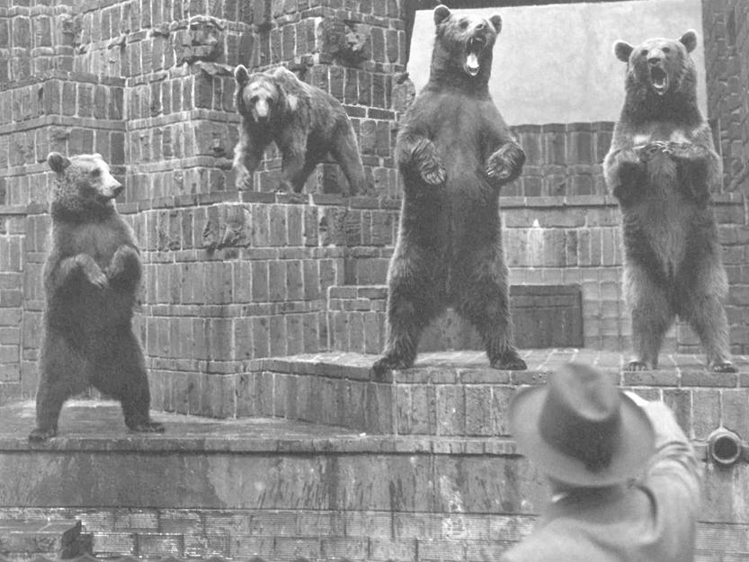 Braunbären, Zoo Leipzig, um 1937